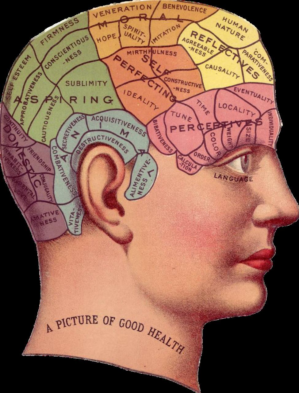 hjärnans delar