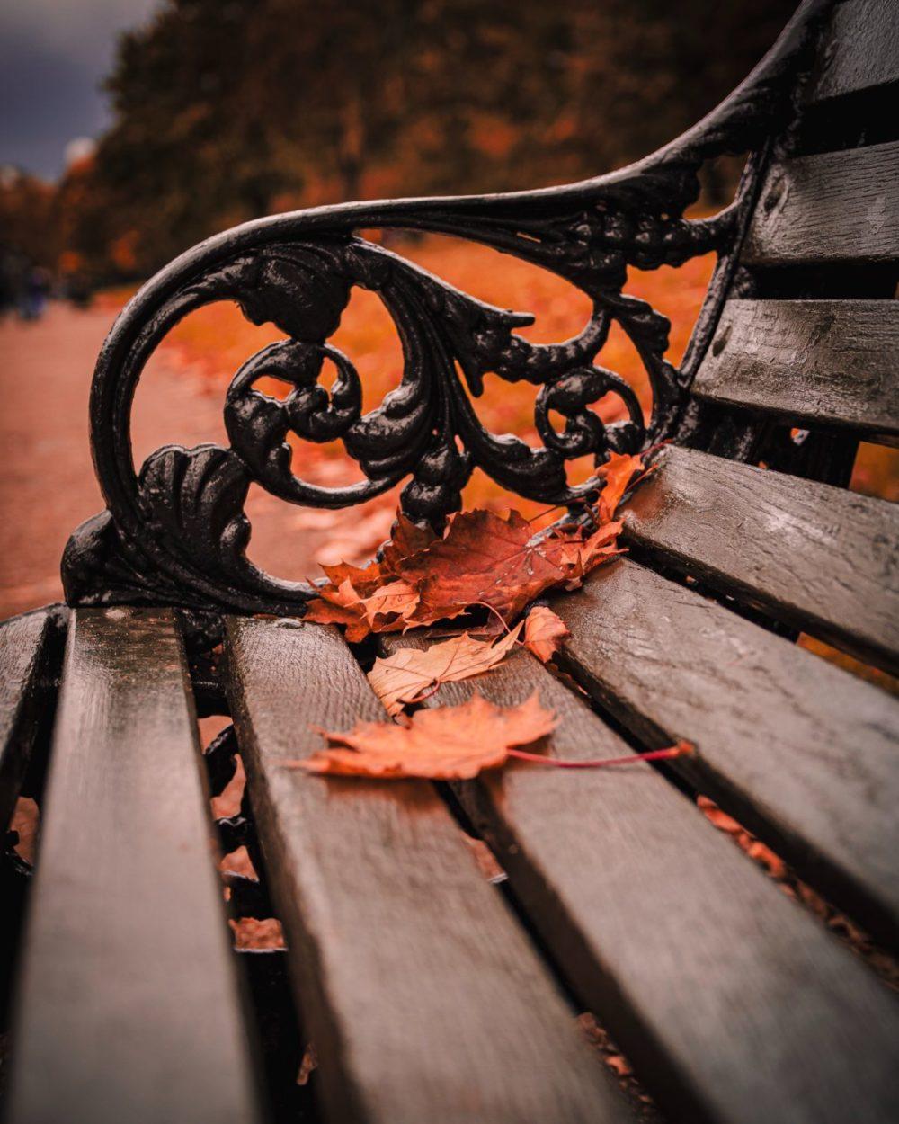 höstlöv på en bänk