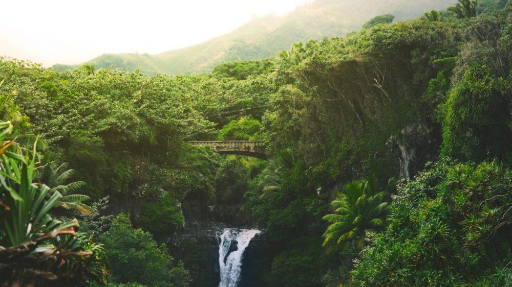 djungel jumanji